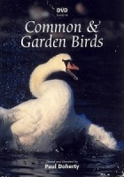 DVD Guide to Common and Garden Birds