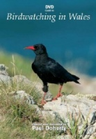 DVD Guide to Birdwatching in Wales