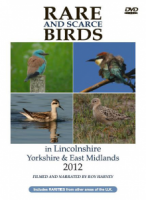 Rare and Scarce Birds in Lincolnshire, Yorkshire & East Midlands 2012