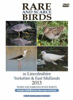 Rare and Scarce Birds in Lincolnshire, Yorkshire & East Midlands 2013