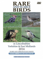 Rare and Scarce Birds in Lincolnshire, Yorkshire & East Midlands 2014