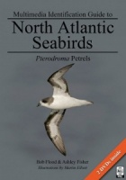 Multimedia Identification Guide to North Atlantic Seabirds: Pterodroma Petrels